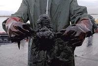 galeb zarobljen u nafti