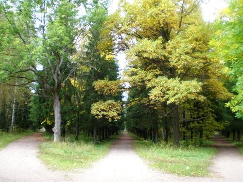 Tri staze koje vode u šumu